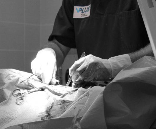 chirurgies 7